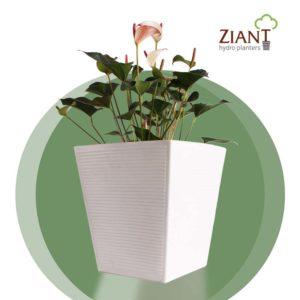 Ziant Hydro Plant Pot