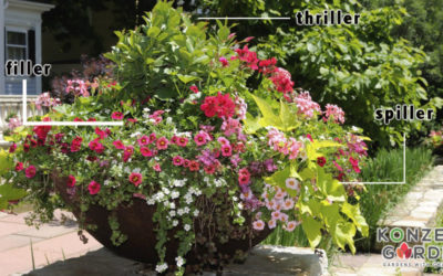 Do you know about flower pots Thriller, Filler & Spiller?