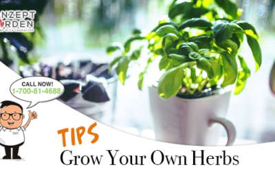 Start Your Own Herb Gardening