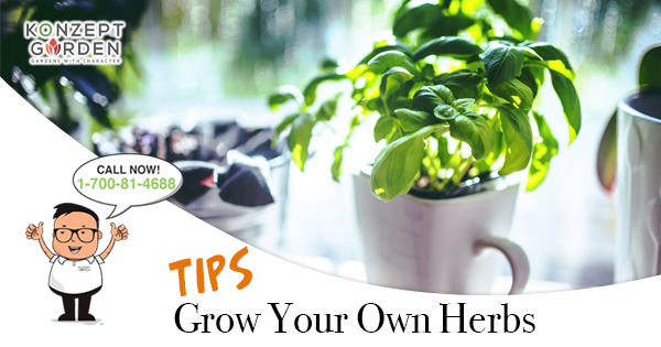 Start Your Own Herb Gardening