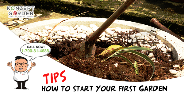 How To Start Your First Plant Garden