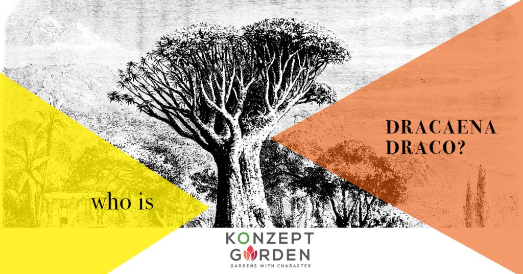 plants, garden, gardening