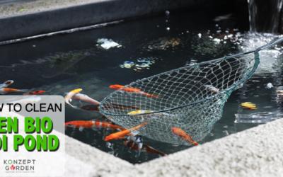 How To Clean Zen Bio Koi Pond?