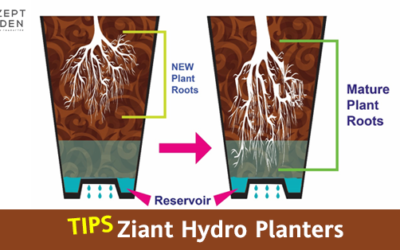 Tips for the new Owner of Ziant Hydro Planter