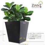 Ziant Hydro Planter Pot (S) Image
