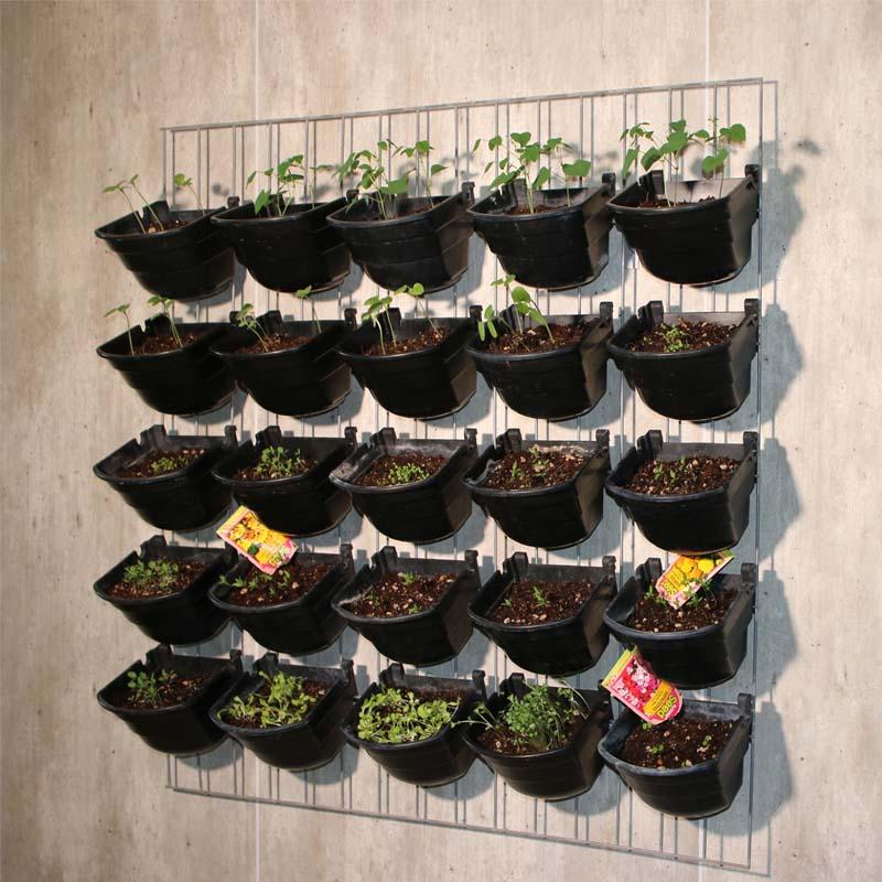 EcoWall (Vertical Garden)