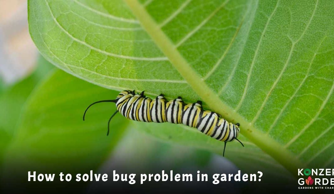 How to solve bug problem in a garden?