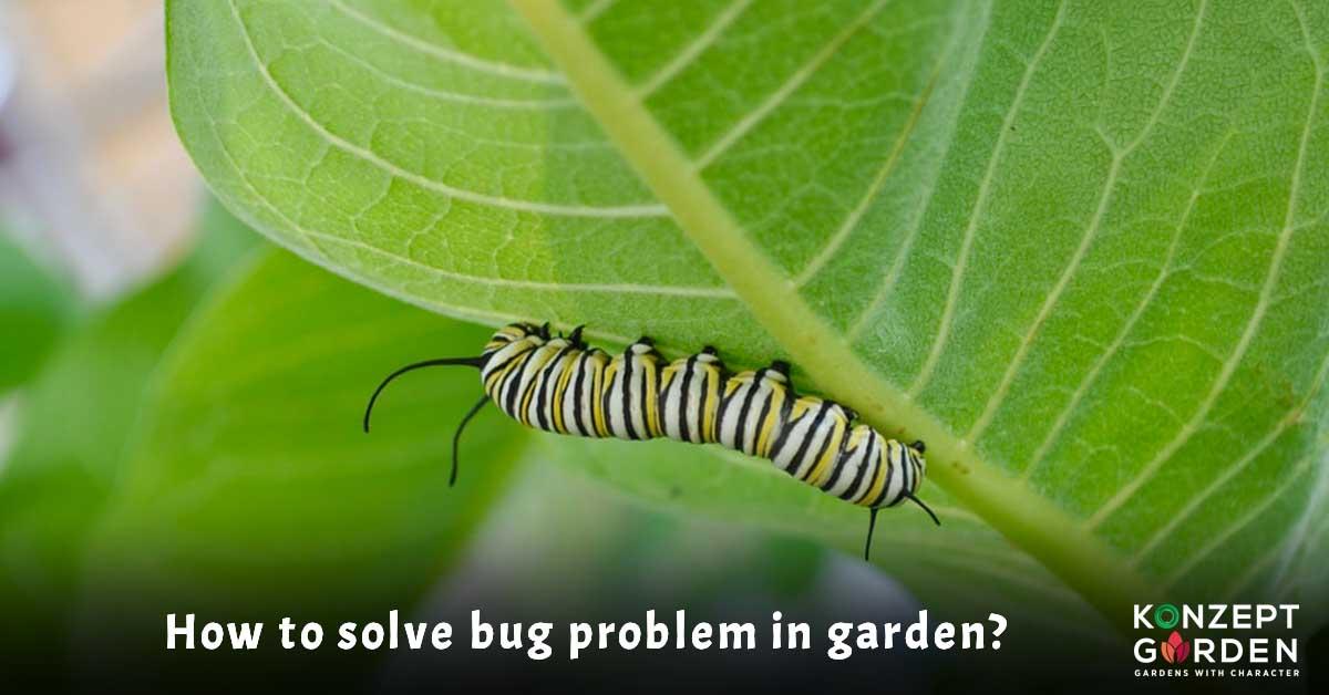 garden, gardening, pest, garden bug