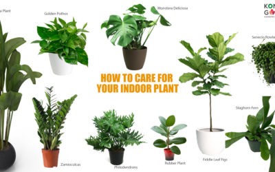 11 Types of Indoor Plants and How To Care For Your Indoor Plant?